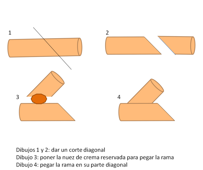 tronco2
